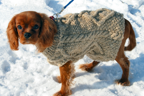 Aggie's Sweater
