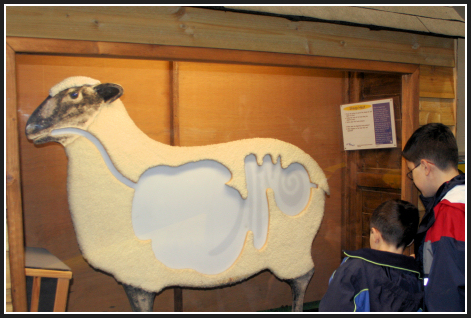 Science_center_sheep